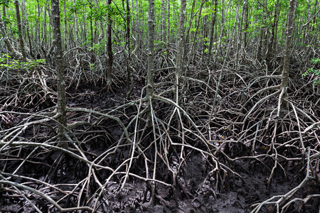 Mangrove forest looks like very terrible place