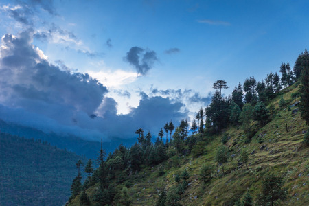 Beautiful deodar forest in Manali on sunset, Himachal Pradesh, India Stock Photo