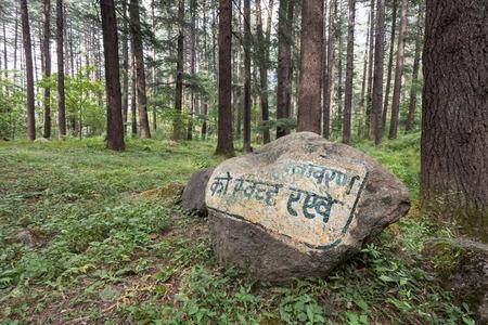 Beautiful deodar forest in Manali, Himachal Pradesh, India