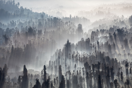 volcanic landscape: Sunrise in the forest near Bromo volcano, Java island, Indonesia