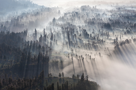 インドネシア ジャワ島ブロモ火山の近くの森で日の出 写真素材
