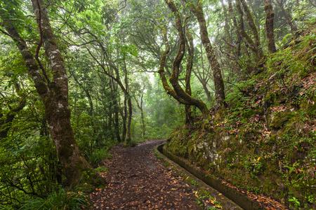 fantasy world: Fantasy world around irrigation canal levada, Madeira Island, Portugal