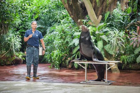 zoo animal: SINGAPORE - OCTOBER 16, 2014: Splash Safari Show in Singapore Zoo.