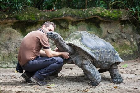 giant man: SINGAPORE - OCTOBER 16, 2014: Unidentified man stroking a giant turtle in Singapore Zoo. Editorial