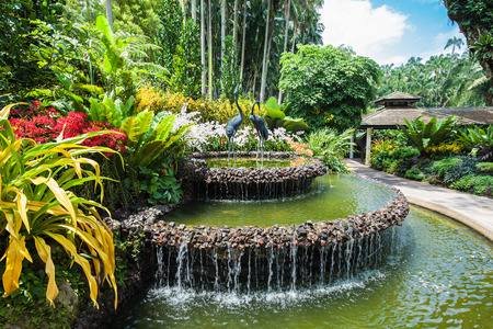tropical garden: SINGAPORE - OCTOBER 17, 2014: The National Orchid Garden, located within the Singapore Botanic Gardens.