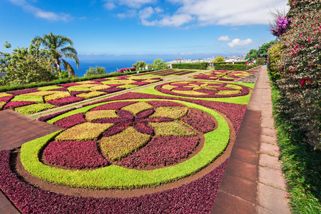 botanical gardens: FUNCHAL, MADEIRA - JuLY 09: Funchal Botanical Gardens on July 09, 2014 in Madeira island, Portugal.