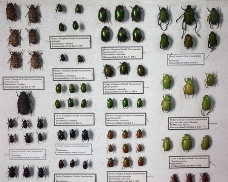natural wonders: CHIANG MAI, THAILAND - OCTOBER 29, 2014: Museum of World Insects and Natural Wonders interior, Chiang Mai, Thailand.