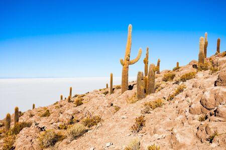 incahuasi: View of cactus covering Island Incahuasi with the Uyuni Salt Flats in Bolivia