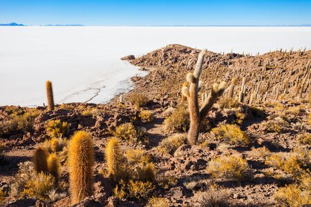 incahuasi: View of cactus covering Island Incahuasi with the Uyuni Salt Flats in Bolivia