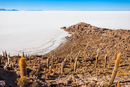 salt flat: View of cactus covering Isla del Pescado (Fish Island) with the Uyuni Salt Flat in Bolivia