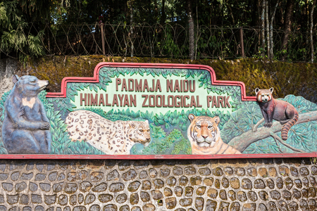 darjeeling: DARJEELING, INDIA - NOVEMBER 18, 2015: Padmaja Naidu Himalayan Zoological Park in Darjeeling, India.