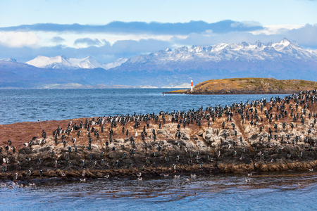 king penguins: Bird Island in the Beagle Channel near the Ushuaia city. Ushuaia is the capital of Tierra del Fuego province in Argentina.