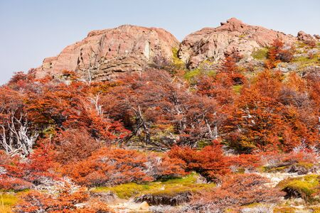 Indian summer forest near the Fitz Roy in autumn. Fitz Roy is a mountain near El Chalten in Patagonia on the border of Chile and Argentina. Stock Photo