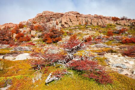 cerro fitzroy: Indian summer forest near the Fitz Roy in autumn. Fitz Roy is a mountain near El Chalten in Patagonia on the border of Chile and Argentina. Stock Photo
