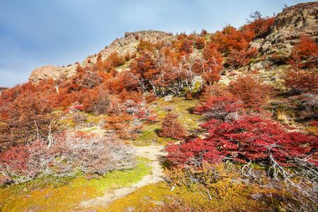 Beauty golden and red forest near the Fitz Roy. It is a mountain near El Chalten in the Patagonia, on the border between Argentina and Chile.