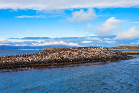 king cormorant: Bird Island in the Beagle Channel near the Ushuaia city. Ushuaia is the capital of Tierra del Fuego province in Argentina.