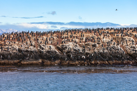 Bird Island in the Beagle Channel near the Ushuaia city. Ushuaia is the capital of Tierra del Fuego province in Argentina.