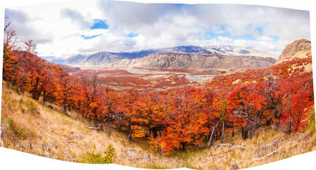 cerro fitzroy: Beauty golden and red forest near the Fitz Roy. It is a mountain near El Chalten in the Patagonia, on the border between Argentina and Chile.