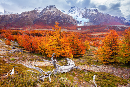 cerro chalten: Indian summer forest near the Fitz Roy in autumn. Fitz Roy is a mountain near El Chalten in Patagonia on the border of Chile and Argentina. Stock Photo