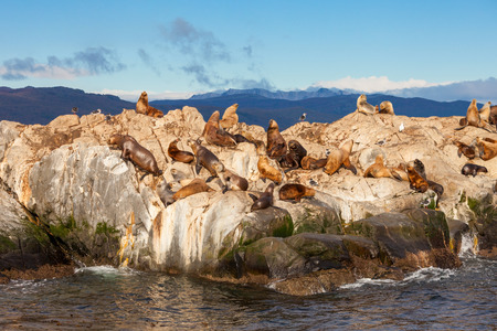 king cormorant: Seal Island in the Beagle Channel near the Ushuaia city. Ushuaia is the capital of Tierra del Fuego in Argentina. Stock Photo