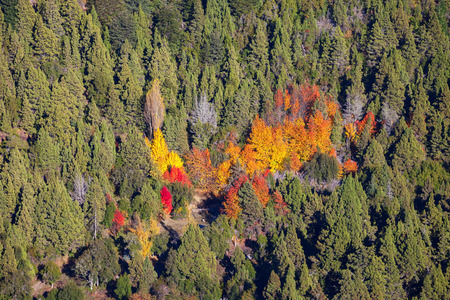 mount tronador: Autumn forest in Nahuel Huapi National Park near the Bariloche, Patagonia region in Argentina. Stock Photo