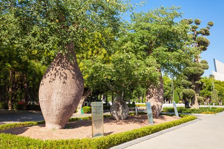 digitata: Baobab at Baku boulevard at the Caspian Sea embankment. Baku is the capital and largest city of Azerbaijan.