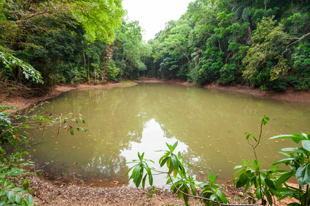 Royal Pond in Kandy Udawatta Kele Royal Forest Park or Udawattakele Sanctuary in the city of Kandy, Sri Lanka
