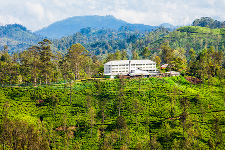 Tea factory and tea plantation in Ella, Sri Lanka. Ella is one of most important places for tea production in Sri Lanka.