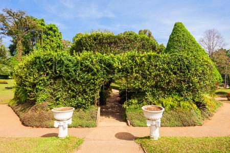 kandy: KANDY, SRI LANKA - FEBRUARY 21, 2017: Peradeniya Royal Botanic Gardens located near Kandy city, Sri Lanka. Peradeniya Royal Botanic Gardens are the largest of the botanical gardens of Sri Lanka.