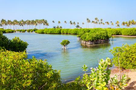 Mangroven bij het Kalpitiya-strand in Sri Lanka. Mangrove is een struik of een kleine boom die groeit in zout of brak water aan de kust.