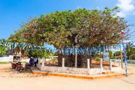 Ancient Baobab Tree in Mannar Island, Sri Lanka