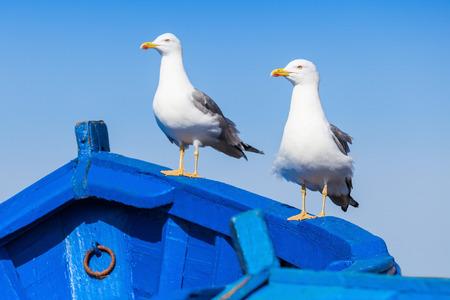Seagull on the fishing boats in Essaouira, Morocco Stock Photo