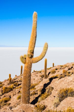 View of cactus covering Island Incahuasi with the Uyuni Salt Flats in Bolivia