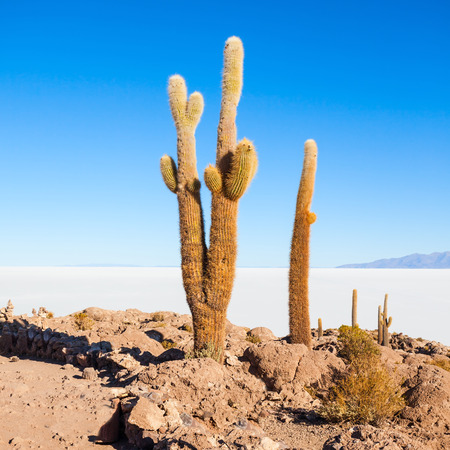 Cactus Island on Salar de Uyuni (Salt Lake) near Uyuni in Bolivia