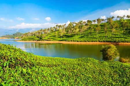 Amazing landscape view of tea plantation and lake nature background