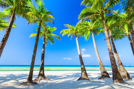 Tropical vacation at white sand beach with coconut palm trees in Boracay island in Philippines