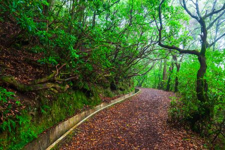 Hiking along levada irrigation channel at Madeira island in Portugal
