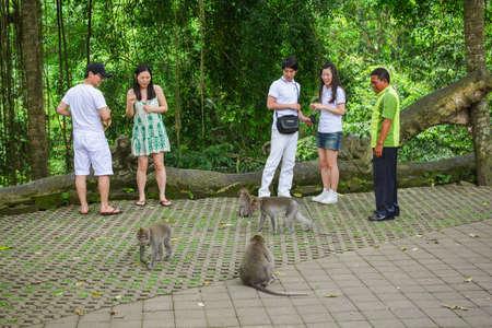 UBUD, BALI - FEBRUARY 22, 2011: Monkey Forest is the sanctuary of Balinese long tailed Monkey in Ubud city, Bali island in Indonesia
