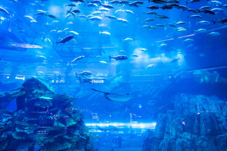 DUBAI, UAE - FEBRUARY 25, 2019: Dubai Aquarium and Underwater Zoo in the Dubai Mall in UAE