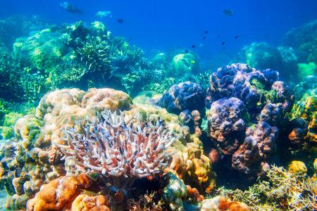 Underwater coral reef tropical sea view landscape Foto de archivo