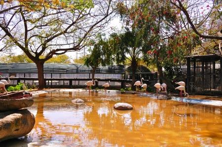 flamingos in the lake Stock Photo - 14131455