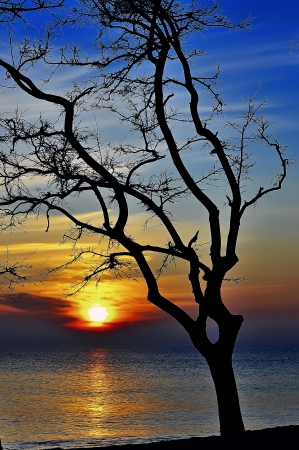 silhouette of autumn tree at sunset