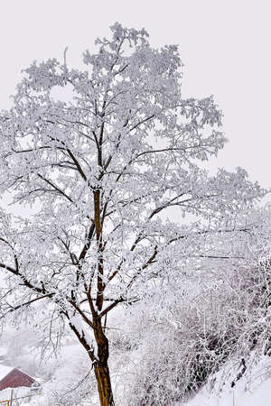 snow covered with a tree on a cloudy winter day Stock Photo