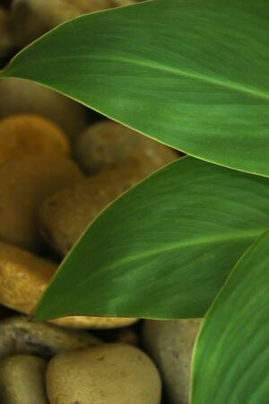 macro shot of decorative tropical leaf with stones against