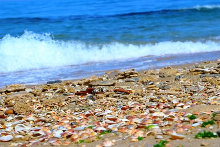seashells and sea foam near the shore photo
