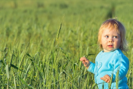 child in a wheat field photo