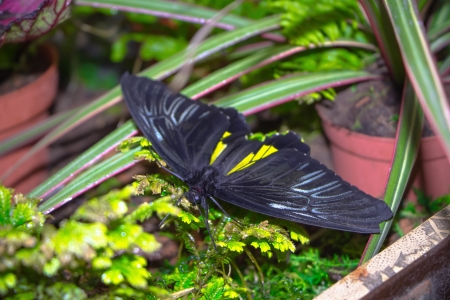 slits: black butterfly with yellow slits midst of greenery