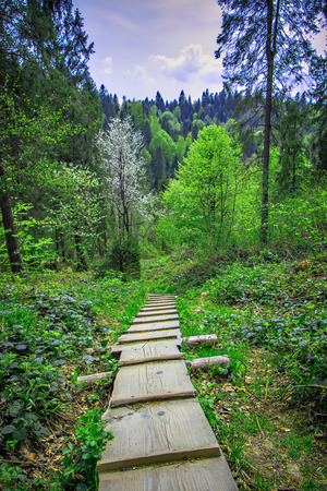 wooden footpath downhill in forest in the spring Stock Photo