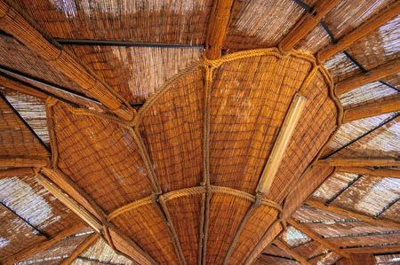 wooden canopy interesting ramification photo