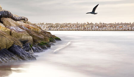 dramatic seascape in the port with a seagull in the sky photo